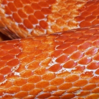33 Sets of High Quality Reptile Skin Texture
