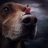 Beautiful Surreal Images For Promoting Shelter Dogs